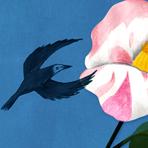 春椿とカラス